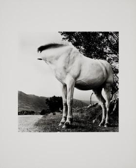 White Horse from the portfolio Alen MacWeeney