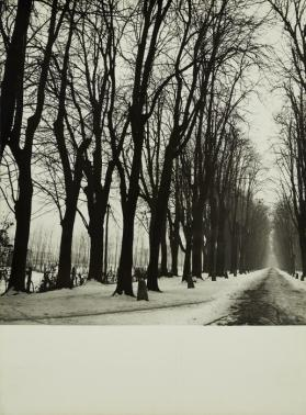 Trees and road in snow