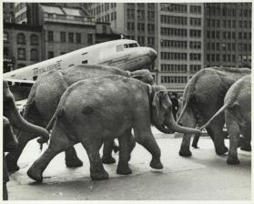 Rockefeller Center (parade of elephants and plane)