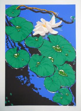 Pond Lillies