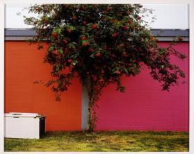 Tree with Refrigerator, Washington